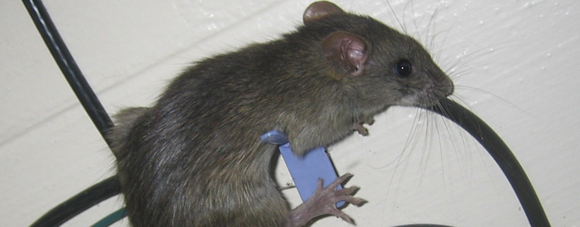 What Are The Risks Of Animals Chewing On Electric Wires